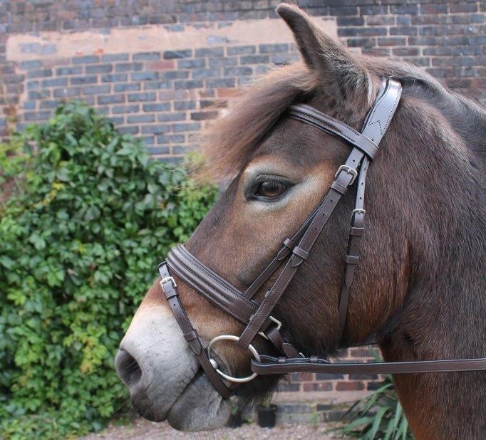 Cavaletti Collection Discovery Bridle Brown