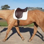 THE NEW CAVALETTI SYNTHETIC SADDLE